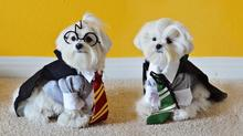 axn-cats-dogs-costumes-8